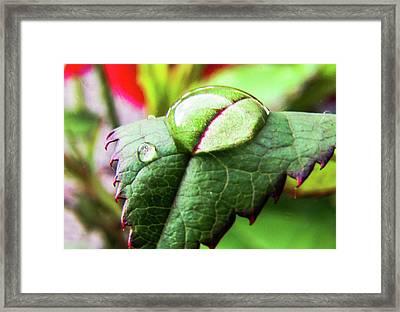 Leaf Framed Print by Cesar Vieira