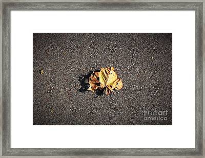 Leaf Closeup Framed Print by Amy Wilkinson