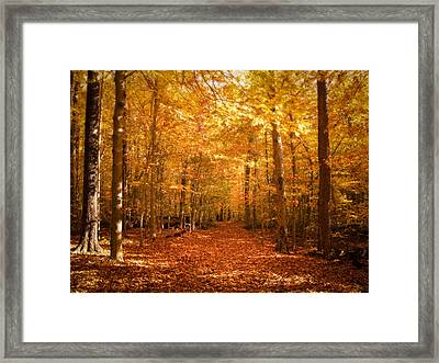 Leaf Covered Pathway In A Golden Forest Framed Print by Chantal PhotoPix