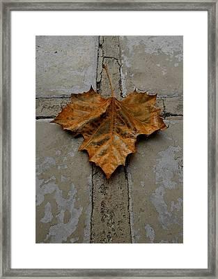 Leaf Cross Framed Print