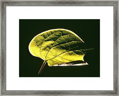 Leaf Detail Framed Print by Gerard Fritz
