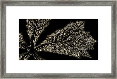 Leaf Detail Framed Print by Martin Newman