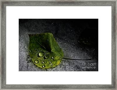 Leaf Droplets Framed Print