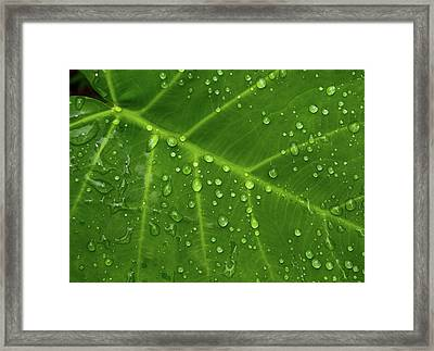 Framed Print featuring the photograph Leaf Drops by Art Shimamura