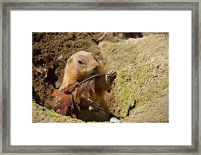 Leaf For Lunch Framed Print by Mike Martin