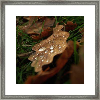 Leaf In Autumn. Framed Print by Bernard Jaubert