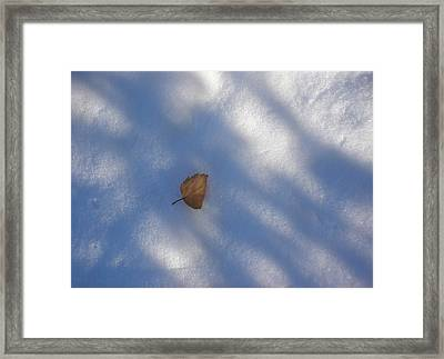 Leaf In Shadows Framed Print