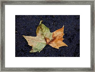 Leaf In The Road Framed Print by Robert Ullmann
