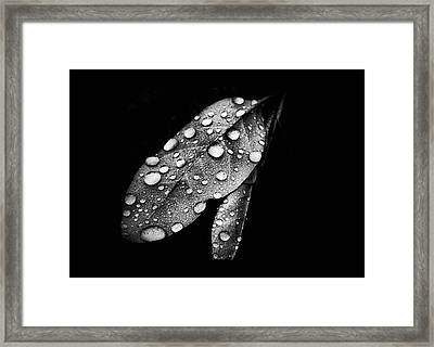 Leaf It Framed Print