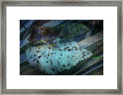 Leaf Lace Blue Framed Print
