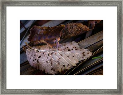 Leaf Lace Framed Print
