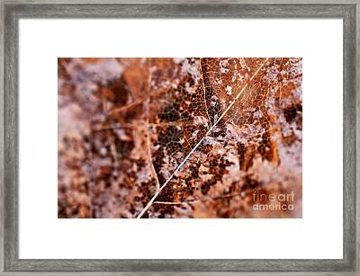 Leaf Lace Framed Print by Venetta Archer