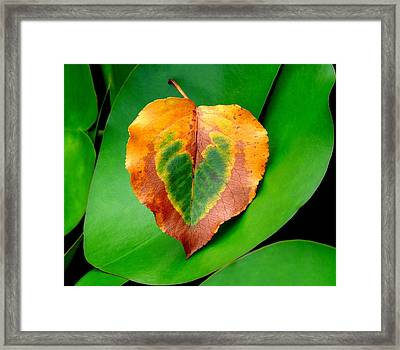 Leaf Leaf Heart Framed Print by Renee Trenholm