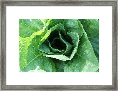 Leaf Lettuce Part 2 Framed Print by Lauri Novak