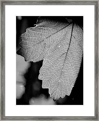 Leaf Light Black And White Framed Print by James Granberry