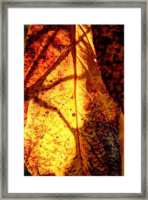 Leaf Light Framed Print