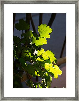 Leaf Light II Framed Print by James Granberry