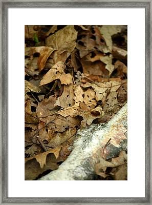 Leaf Litter Framed Print by Mark Platt