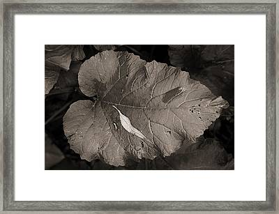 Leaf On A Leaf Framed Print