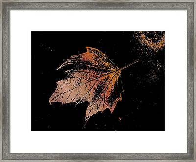 Leaf On Bricks Framed Print by Tim Allen