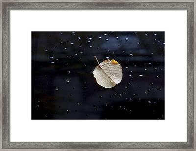 Leaf On Car Door Framed Print by Robert Ullmann