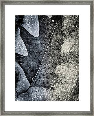 Leaf On Ice Framed Print