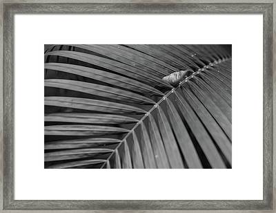Leaf On Leafs Framed Print