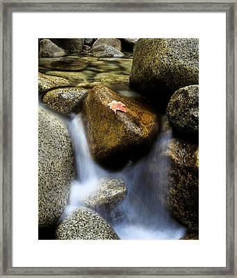 Leaf On Rock-yosemite Valley Framed Print