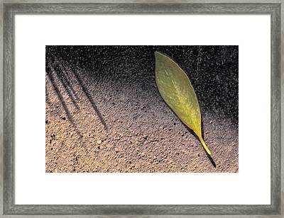 Leaf On Street Framed Print