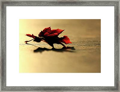 Leaf On The Garage Floor Framed Print