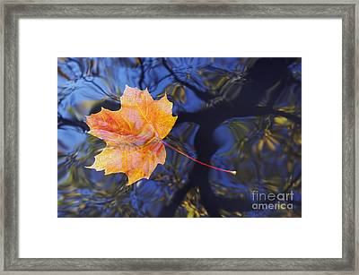 Leaf On The Water Framed Print