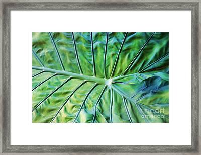 Leaf Pattern Framed Print by Teresa Zieba