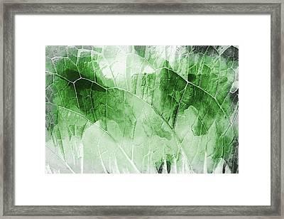 Leaf Pattern  Framed Print by Tom Gowanlock