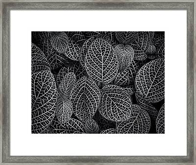 Framed Print featuring the photograph Leaf Pattern by Wayne Sherriff