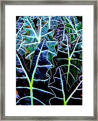 Leaf Patterns Framed Print by Shirley Sirois
