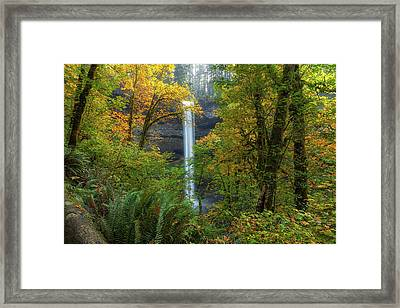 Leaf Peeping And Waterfall Framed Print by David Gn