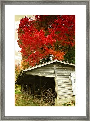 Leaf Peeping Framed Print by Mindy Sommers