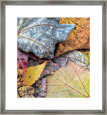 Leaf Pile Up Framed Print by Todd Breitling