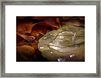 Leaf Pool Framed Print