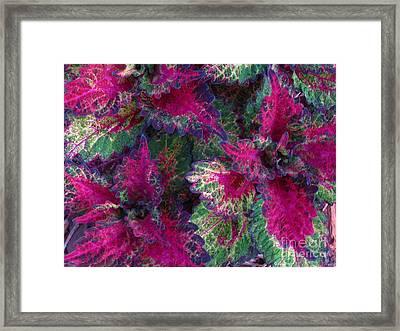 Leaf Power Framed Print by Greg Patzer