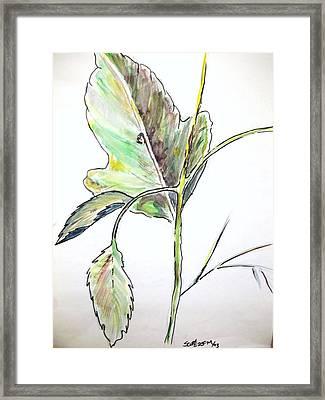 Leaf  Framed Print by Scott Easom