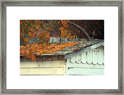 Leaf Shed Framed Print by Holly Ethan