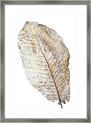 Leaf Skeleton Framed Print by Garry Gay