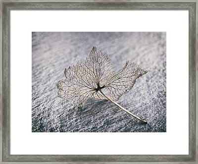 Leaf Skeleton Framed Print