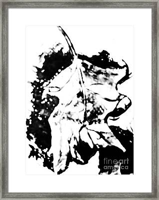 Leaf Study Black And White Framed Print by Jamey Balester