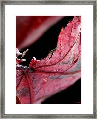 Leaf Study I Framed Print