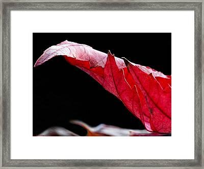 Leaf Study IIi Framed Print