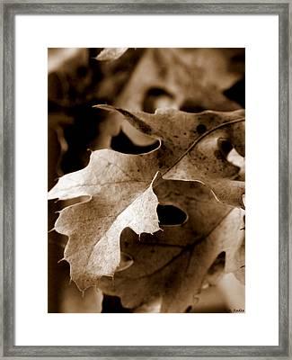 Leaf Study In Sepia IIi Framed Print