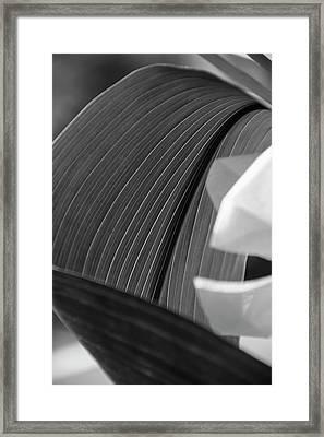 Leaf Texture Framed Print