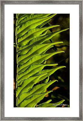 Leaf To The Right Framed Print by Christopher Holmes